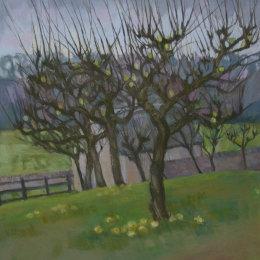 Bibury Orchard 1