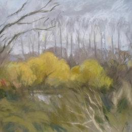L Autumn Willows