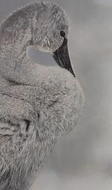 slimbridge wildfowl trust inspired pictures
