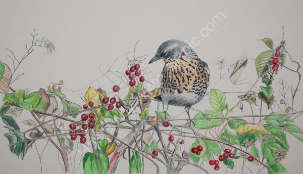 fieldfare and berries SOLD