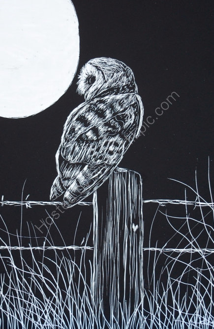 barn owl and moon SOLD