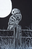 barn owl and moon