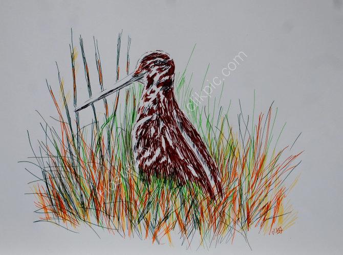 snipe sketch