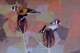 goldfinches SOLD