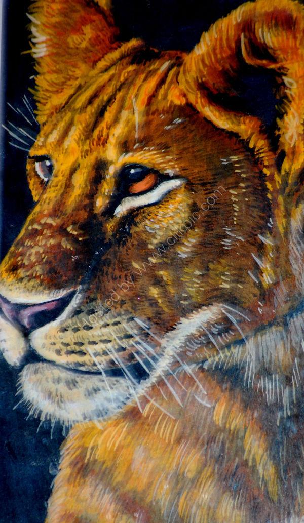 lionness head