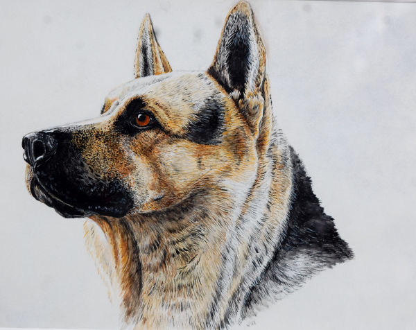german shepherd dog SOLD