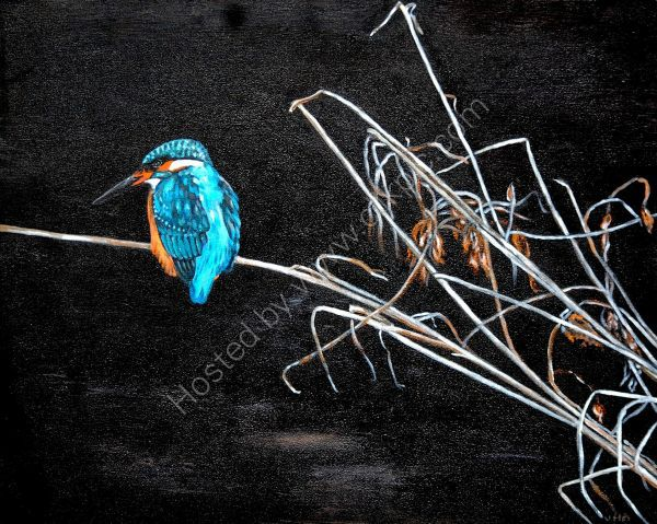 patient kingfisher
