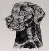 black lab SOLD