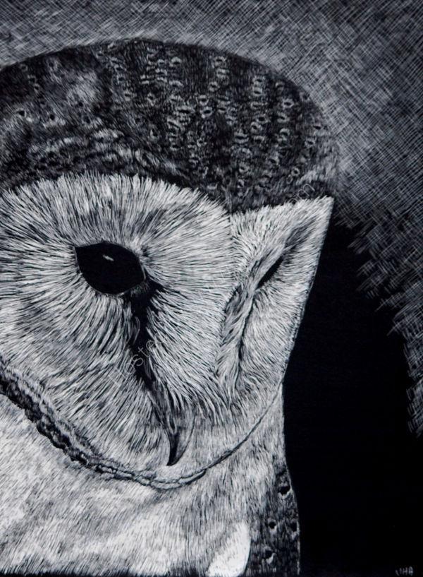 Barn Owl portrait SOLD
