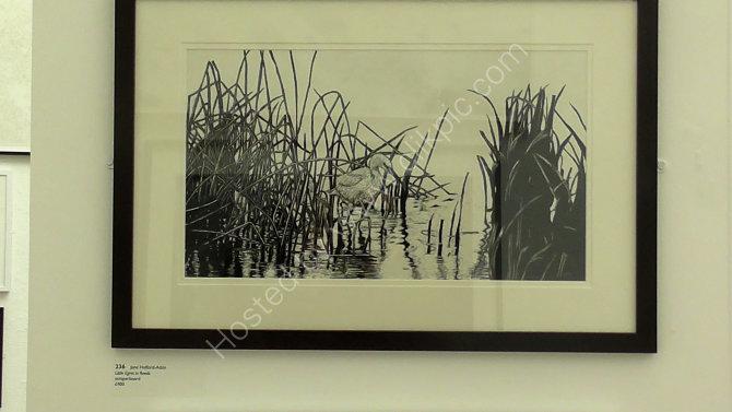 little egret in reeds