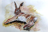 reclining hare