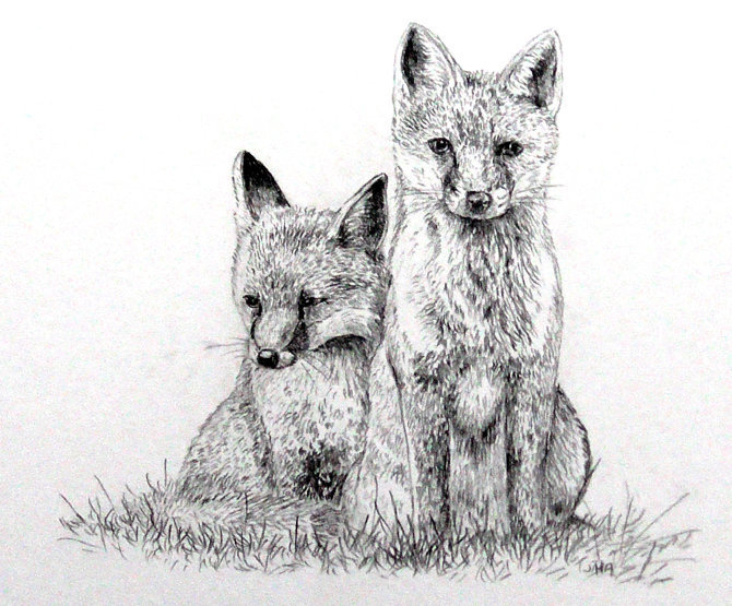 little foxes SOLD