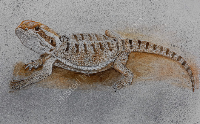 bearded dragon SOLD