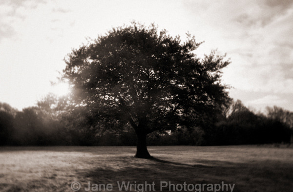 Tree with early morning sun