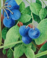 Detail of 'Blueberries'