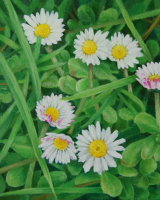 Daisies, daisies