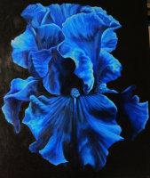 Iris series