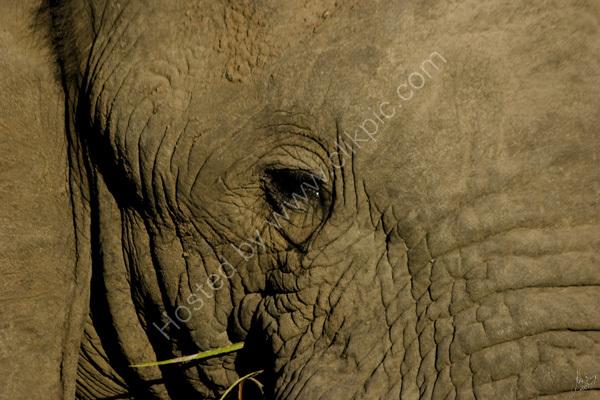 Elephant's eye!