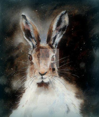 hare, moonlit, fine art, painting, watercolour, watercolor, giclée, contemporary