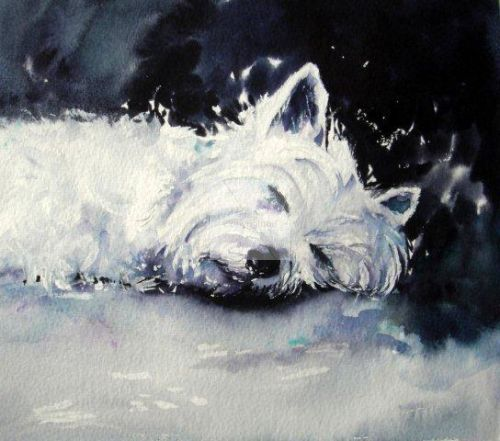 West highland, terrier, dog, dog lover, painting, contemporary, art, fine, watercolour, watercolor