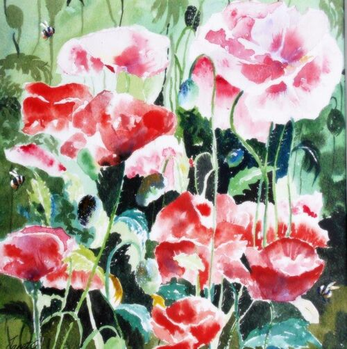 poppies, flowers, floral, bees, garden, wildlife, blank inside, happy birthday, card for her, wife, sister, aunt, daughter, large, quality,