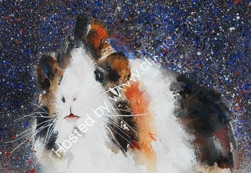 guinea pig, animals, watercolour, art, pets, cute