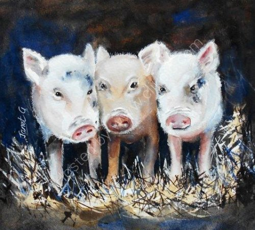 pigs, farmyard, piglets, cute, querky, watercolour, fine art, contemporary, painting
