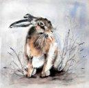 Unaware Hare