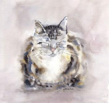 cat, tabby, watercolour, fine art, print, giclee, contemporary, cute, watercolor, pet