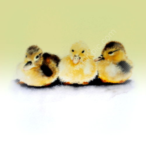 greeting, card, cute, baby, Easter, newborn, art, ducks, watercolour, birthday, celebration, anniversary, art, birthday