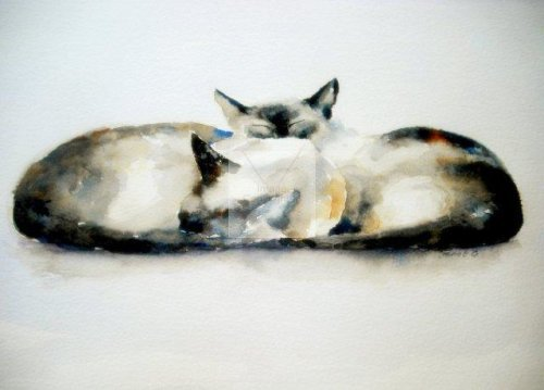 burmese, siamese cat, cat lover, painting, fine art, watercolour, watercolor, sleeping cats