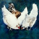 'Chicken Feed' Greeting Card