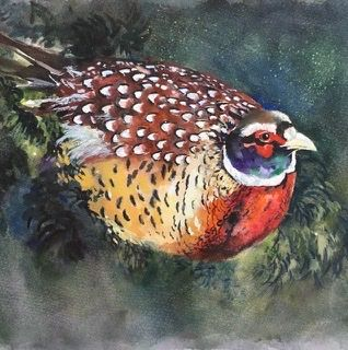 Birthday card for him, her, uncle, brother, husband, dad, father, son, pheasant, wildlife, happy birthday, thank you,greetings, friend, card, fine art, watercolor, blank inside, large square, quality
