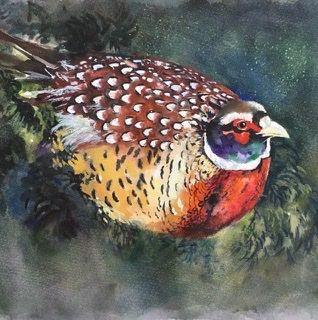 Christmas card, pheasant, birds, game, square blank card, wildlife, woodland creature, undergrowthcolourful, greetings, birthday, seasonal, greetings card