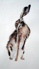 Hare Grooming