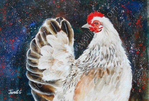 chicken, animals, art, cute, farm, watercolour, farmyard animal, birds, contemporary art, fine art, watercolour