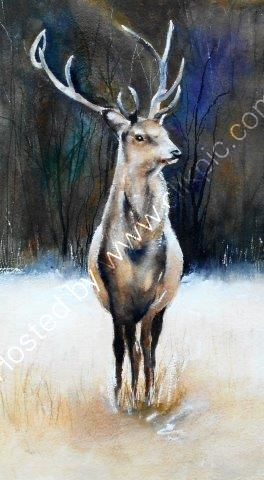 stag, wildlife, watercolour, game, art, animals, Scotland, highland, game, watercolour, art, contemporary, fine art