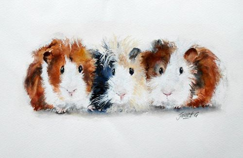 guinea pigs, watercolour, quirky, funny, painting, fine art, original animal artwork, contemporary, award winning artist, framed artwork, pets, children's bedrooms, fun artwork,