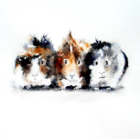'Guinea Pigs'