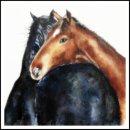 'Horses' Greeting Card