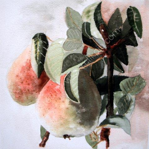 greeting, card, watercolour, birthday, pears, mother, celebration, anniversary