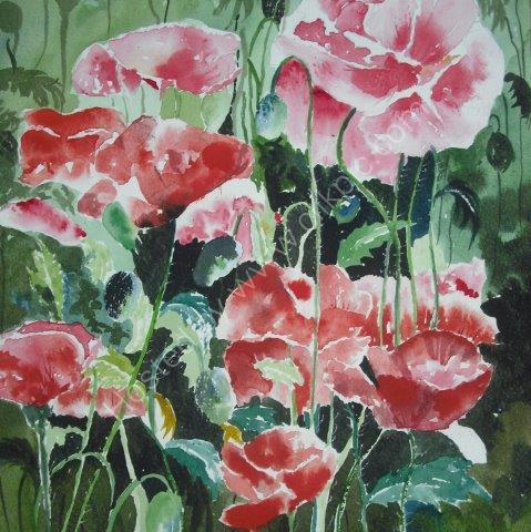 poppy, poppies, poppy field, countryside, garden, wild flowers, plants, horticultural, fine art, watercolour, watercolor