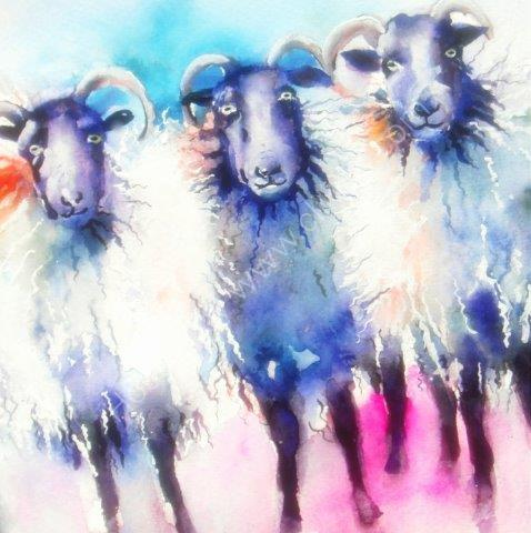 greeting, card, watercolour, sheep, farm, farmyard, birthday, celebration, anniversary, art, birthday