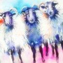 'Sheepish' Greeting Card
