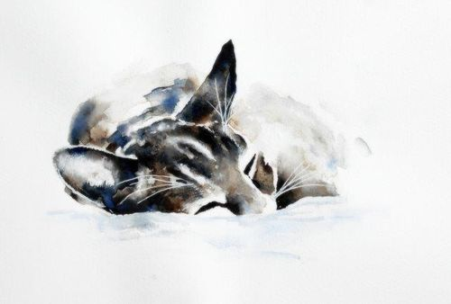 giclée, art, cat, watercolour, sleeping, contemporary, cute, tabby
