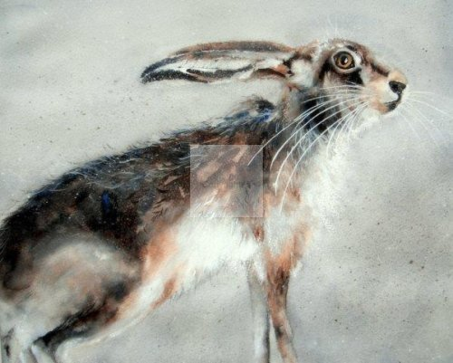 hare, giclée, art, print, watercolour, wildlife, contemporary, fine, painting