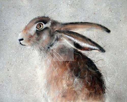 young, hare, baby, leveret, print, giclée, art, watercolour, fine, brown, wildlife, painting