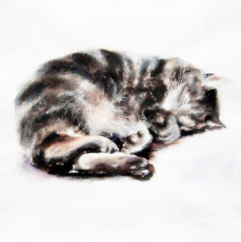 tabby, cat, sleeping, cute, art, giclee, watercolour, print