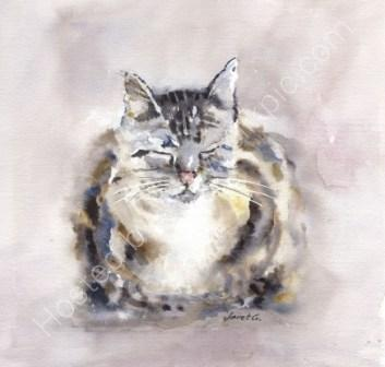 greeting, card, watercolour, birthday, celebration, anniversary, art, contemporary design, cute,cute, cat, tabby