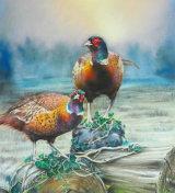 Two cock pheasants